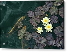 Water Lilies And Koi Acrylic Print