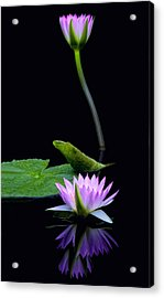 Water Lilies And Reflections Acrylic Print by Margaret Barry