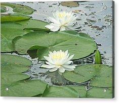 Water Lilies At Conesus Lake Acrylic Print by Charlotte Gray