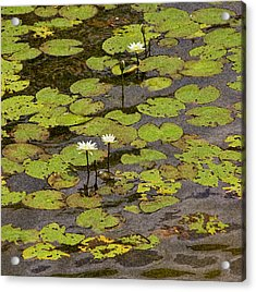 Water Lilies Acrylic Print by Gwen Vann-Horn