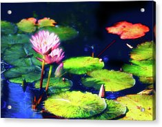 Acrylic Print featuring the photograph Water Lilies by Harry Spitz