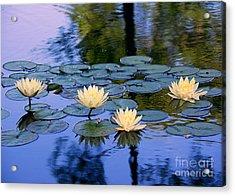 Water Lilies Acrylic Print by Lisa L Silva