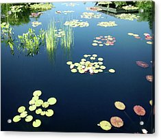 Acrylic Print featuring the photograph Water Lilies by Marilyn Hunt