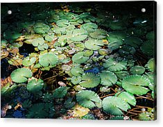 Water Lillies Acrylic Print