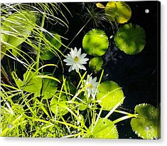 Water Lillies Acrylic Print by John Parry