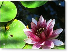 Water Lilly Acrylic Print