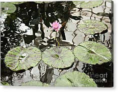 Water Lily Canvas Acrylic Print by Carol Groenen