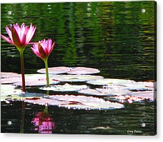 Water Lily Acrylic Print by Greg Patzer