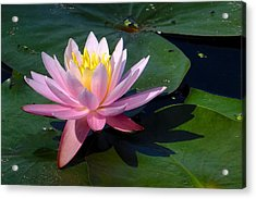 Water Lily In Mountain Lake Acrylic Print