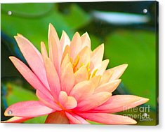 Water Lily In Pond Acrylic Print