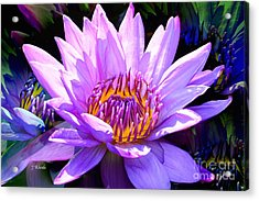 Water Lily In Purple Acrylic Print by Jeannie Rhode