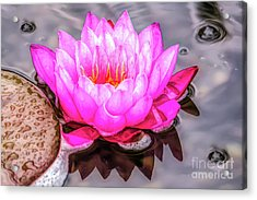 Water Lily In The Rain Acrylic Print