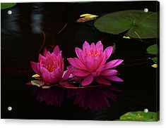 Water Lily Acrylic Print by Nancy Landry