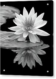 Water Lily Reflections I Acrylic Print