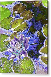 Water Lily Acrylic Print by Robert Ball