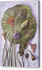 Water Lily Seed Pods Framed By A Leaf Acrylic Print
