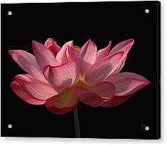 Water Lily Acrylic Print by Sue  Brehant
