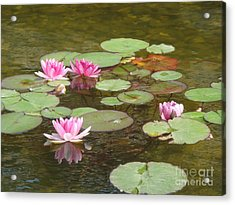 Water Lily Acrylic Print by Tierong Fu