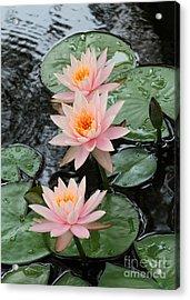 Water Lily Trio Acrylic Print