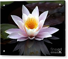 Water Lily With Reflection  Acrylic Print by Neil Doren