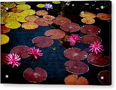Water Lily World Acrylic Print