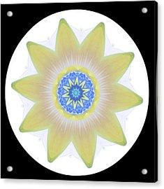 Water Lily Yellow Acrylic Print