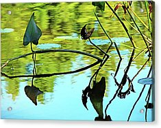 Water Plants Acrylic Print by Debbie Oppermann