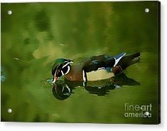 Male Wood Duck Water Reflections Acrylic Print by Claudia Ellis
