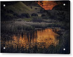 Waterbird Preserve Sunrise Acrylic Print