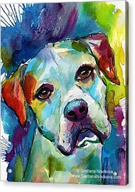 Watercolor American Bulldog Painting By Acrylic Print