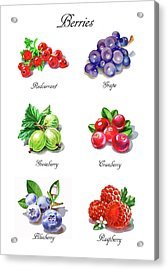 Watercolor Berries Illustration Collection I Acrylic Print