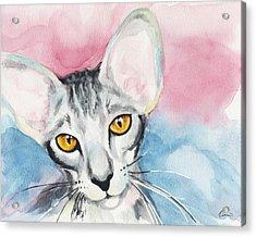 Watercolor Cat 04 Big Ears Cat Acrylic Print