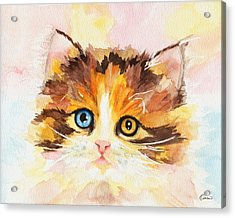 Watercolor Cat 12 Cute Kitten Acrylic Print