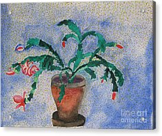 Watercolor Christmas Cactus First Bloom Acrylic Print by James SheppardIII