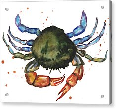 Watercolor Crab Painting Acrylic Print by Alison Fennell