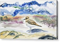 Acrylic Print featuring the painting Watercolor - Double-banded Plover On The Beach by Cascade Colors