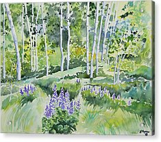 Watercolor - Early Summer Aspen And Lupine Acrylic Print