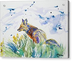 Acrylic Print featuring the painting Watercolor - Fox On The Lookout by Cascade Colors