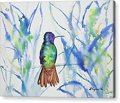 Watercolor - Golden-tailed Sapphire Acrylic Print