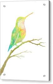 Watercolor Hummingbird Acrylic Print