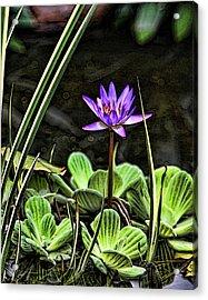 Watercolor Lily Acrylic Print