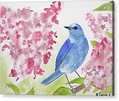 Acrylic Print featuring the painting Watercolor - Mountain Bluebird by Cascade Colors