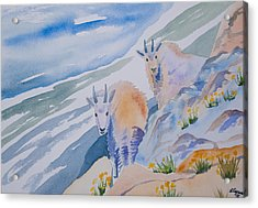 Acrylic Print featuring the painting Watercolor - Mountain Goats On Quandary by Cascade Colors