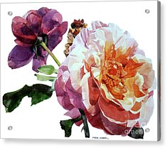 Watercolor Of Two Roses In Pink And Violet On One Stem That  I Dedicate To Jacques Brel Acrylic Print