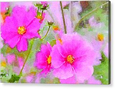 Acrylic Print featuring the painting Watercolor Pink Cosmos by Bonnie Bruno