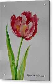 Watercolor Series No.  228 Acrylic Print
