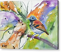 Acrylic Print featuring the painting Watercolor - Spotted Antbird by Cascade Colors