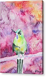 Acrylic Print featuring the painting Watercolor - Violet-tailed Sylph by Cascade Colors