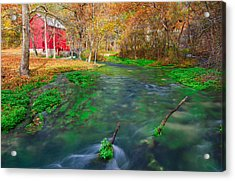 Watercress At Alley Spring  Acrylic Print