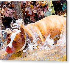 Waterdog Acrylic Print by John Toxey